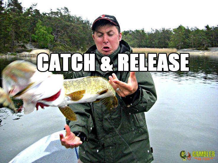 12 Best Fishing Memes Images On Pinterest