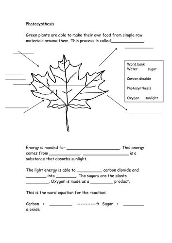 Photosynthesis With Word Bank Doc  With Images
