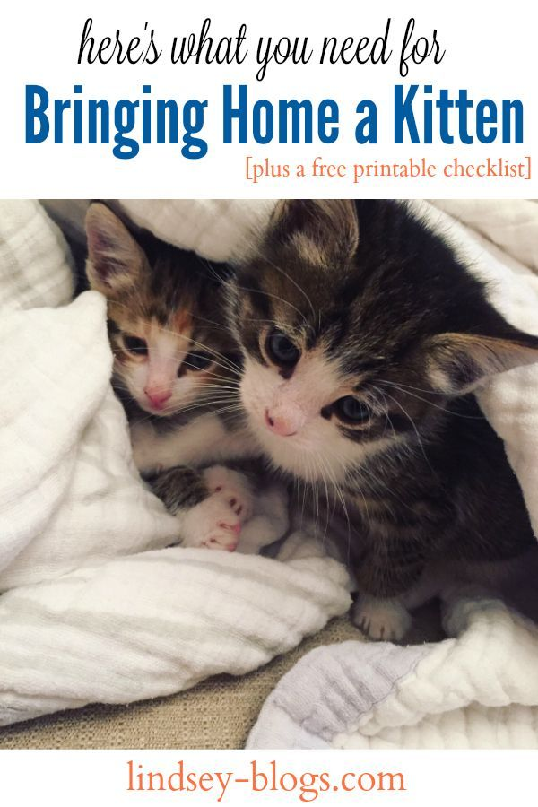 Bringing Home a Kitten with a Free Printable Checklist ad #UltimateLitter