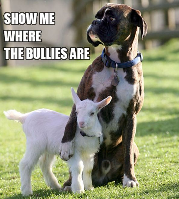 """Bulldog protecting goat, """"show me where the bullies are."""" lol"""