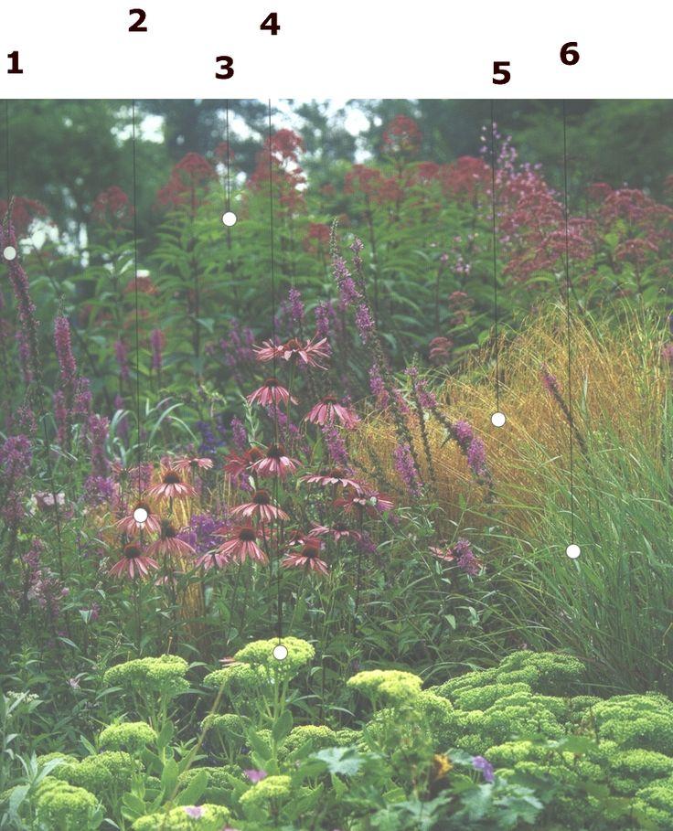Maroon Garden Ideas: 17 Best Images About Sedumsoorten En Toepassingen On