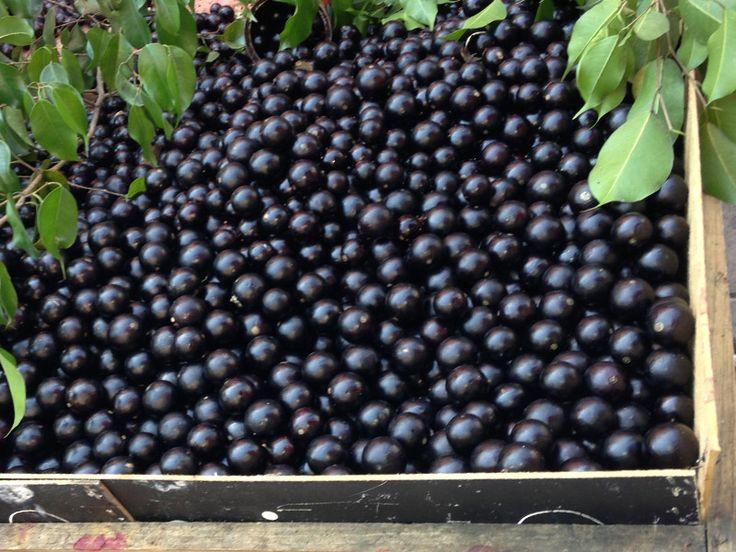 7 árvores frutíferas que vão bem até em vaso.