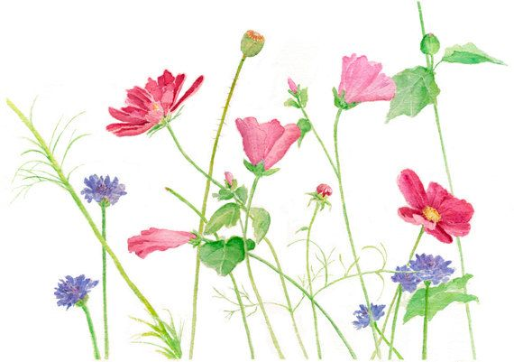 With thoughts of spring...my Wildflowers print.