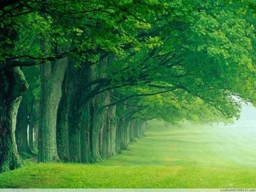 Forests, Walks, God, Beautiful, Louisville Kentucky, Green Nature, Desktop, Trees, Places