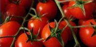 pruning cherry tomatoes