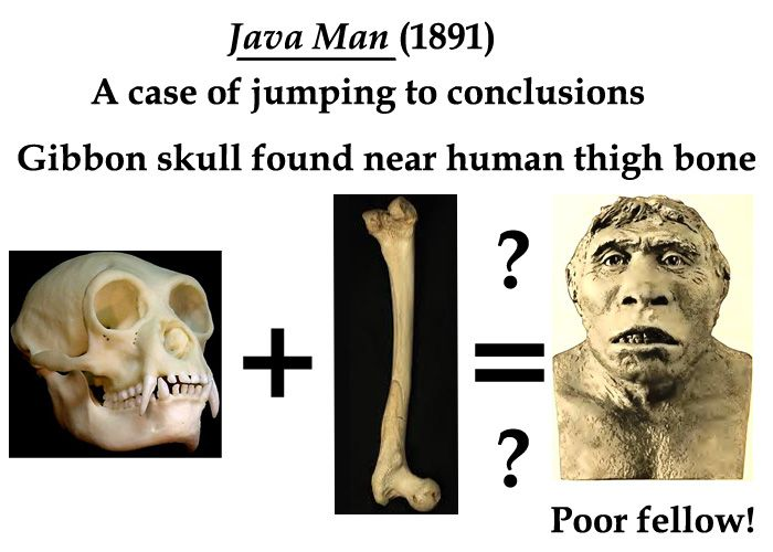 Java Man (1891) – An ape-like skull was found near a human thigh bone. Later investigation showed the creature was a giant gibbon, and the thigh bone had nothing to do with the skull.
