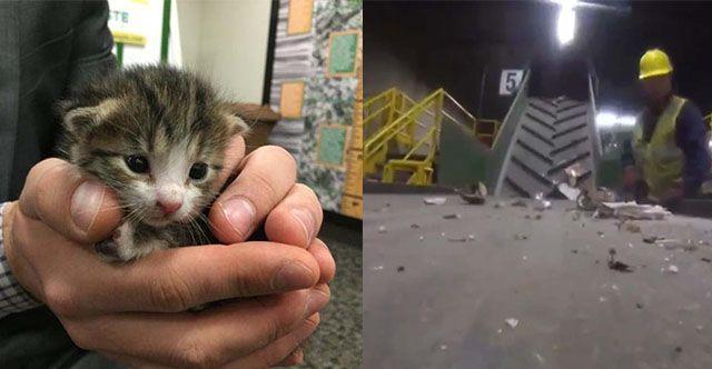Salvan a un pequeño gato a punto de morir en un centro de reciclaje,el animal fue descubierto justo cuando sedirigía por una cinta transportadora.