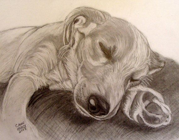 Original graphite drawing of Google the Puppy by CarolZeockFineArt, $30.00