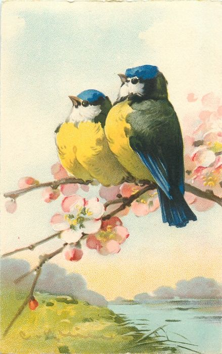two yellow breasted bluetits sit on blossom branch facing left, water below right