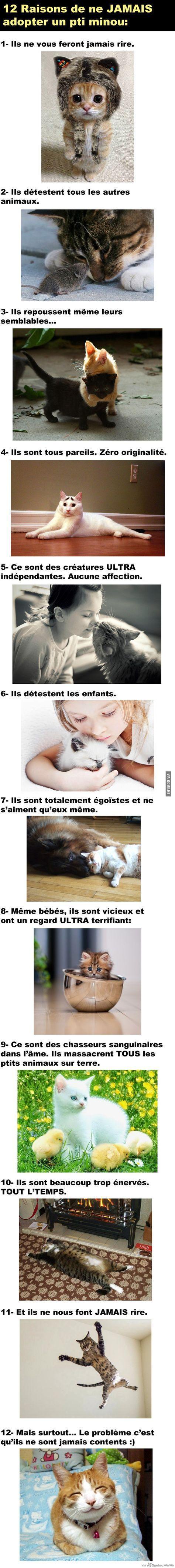 (3608 non lus) - SFR Mail | Mail Ah ah très drôle!! Perso je trouve les chats aaaadorable!! Petite dédicace à Hélloïse