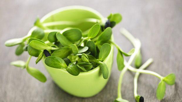 Vitamínový poklad z misky za pár dnů.Jak  a dlouho a co naklíčit