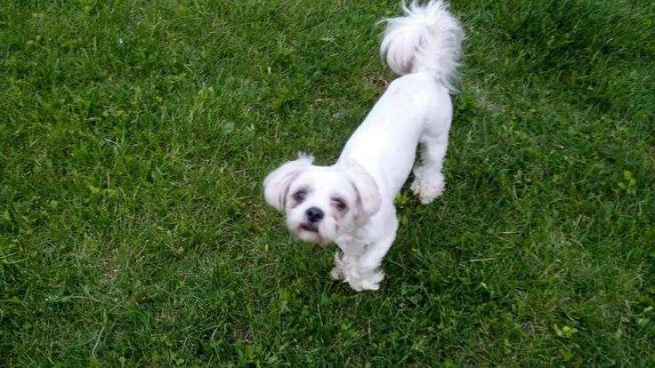 #Founddog 5-23-14 #Bellevue #NE 25th & Cornhusker Street No collar Nebraska Humane Society https://m.facebook.com/story.php?story_fbid=319816871505735&substory_index=0&id=279793758841380