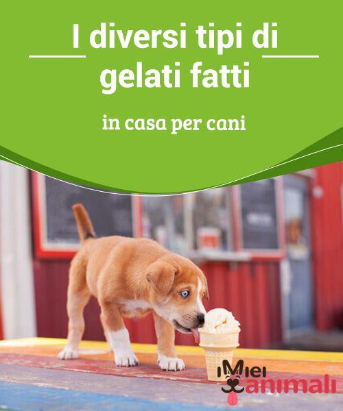 I diversi tipi di gelati fatti in casa per cani   Quando le #temperature salgono e il #caldo #soffoca, avere a portata di mano delle ricette di gelati per #cani è un'ottima opzione. #Alimentazione