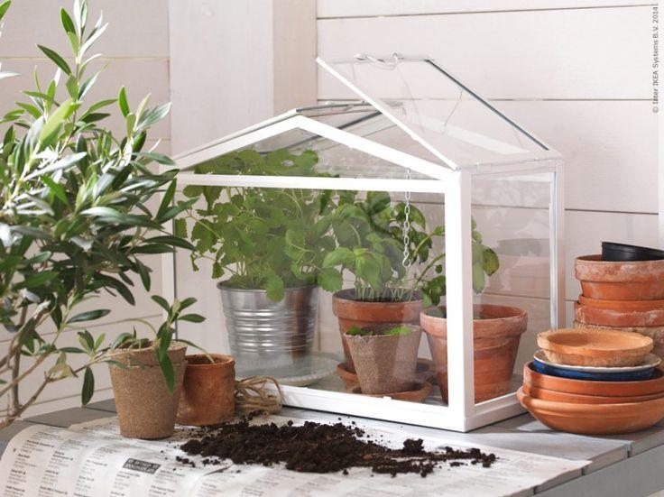 Det lilla växthuset SOCKER är perfekt för sommarens balkongodling. Kryddor och grönsaker växer snabbt i högre temperatur och luftfuktighet och det är lätt att flytta in och ut i solen.