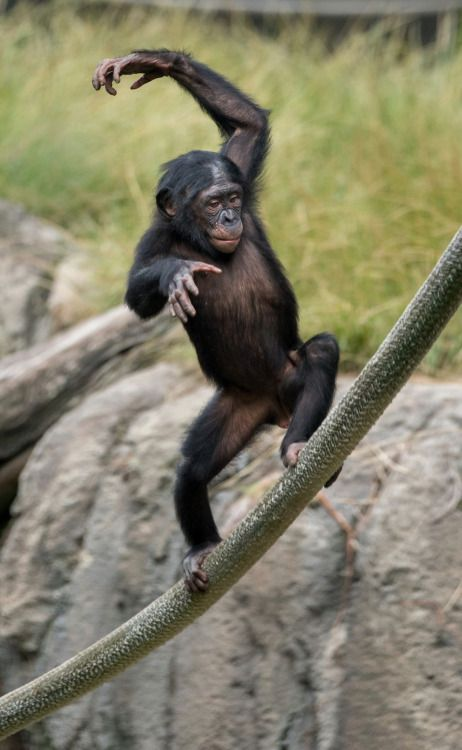 a look at acts of cannibalism and infanticides in chimpanzees Acts acuff ada adam adams adan adana adar adas addams adderley addie addison adela adelaide adele adeline aden adenauer adhara adidas adirondack adirondacks adkins.