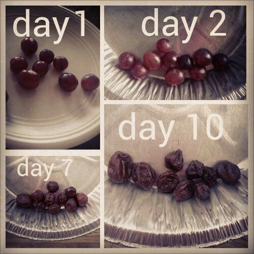 308 best kids science images on pinterest science ideas day making raisins science experiment forumfinder Images