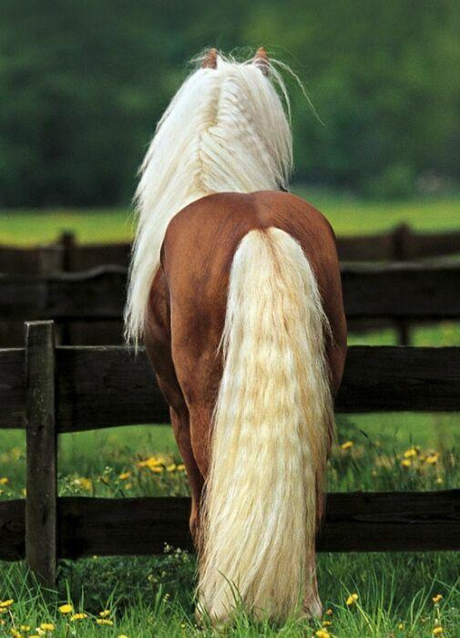 красивые фото девушек с лошадьми - Поиск в Google
