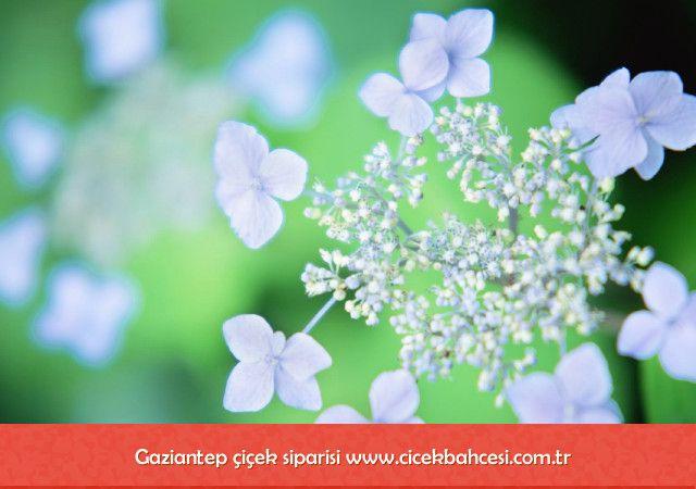 Gaziantep çiçekçi - http://www.cicekbahcesi.com.tr/cicekci/gaziantep-cicek/