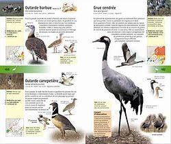 """440 oiseaux"" - Volker Dierschke"