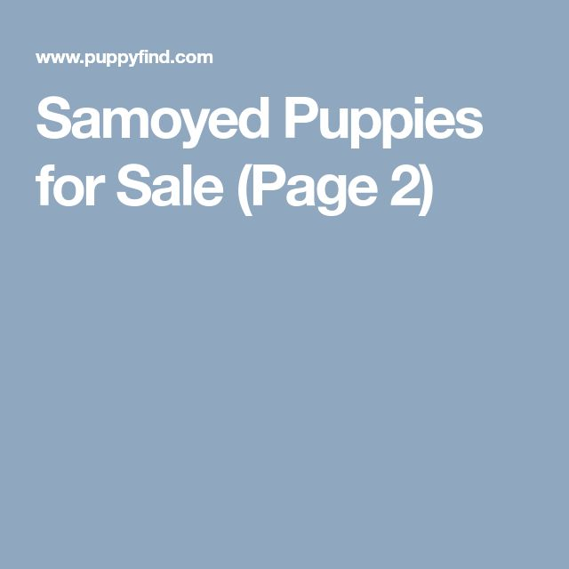 Samoyed Puppies for Sale (Page 2)