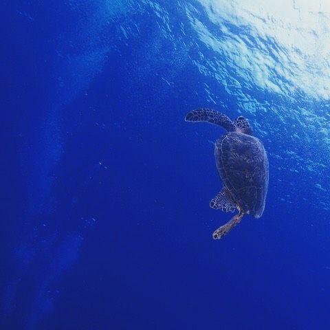【riochan1210】さんのInstagramをピンしています。 《. ダイビングで念願のウミガメとクジラに遭遇😘👍 可愛くて神秘的でやっぱり海の中は最高! #沖縄#okinawa#めんそーれ#海#beach#ビーチ#旅行#travel#サンセット#sunset#sea#恩納村#那覇#国際通り#ダイビング#diving#ウミガメ#日本#japan#happy#飛行機#airplane#羽田空港#ミラーレス#一眼レフ#OLYMPUS#friend#instapic#instagood#fitness