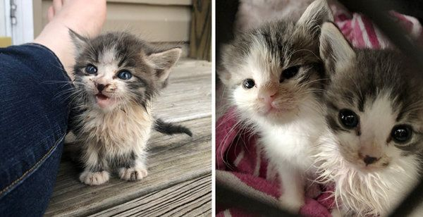 Stray Kitten Ran Up To A Couple Meowing For Help He Brought His