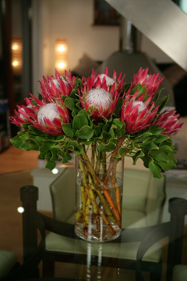 protea arrangement, in my not so humble opinion protea should not be arranged in bunches. The flower is majestic enough that one is enough, with a little foliage. This detracts from their beauty, the colours are gorgeous.