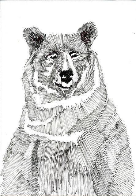 bear, illustration, drawing, mark making