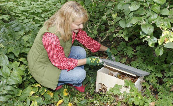Ein Winterquartier für Igel  Igel überwintern meist unter Laub- oder Reisighaufen, die in kleinen Gärten oft fehlen. Doch für ein Igelhaus ist immer genug Platz. Dieser Bausatz lässt sich leicht zusammenbauen.