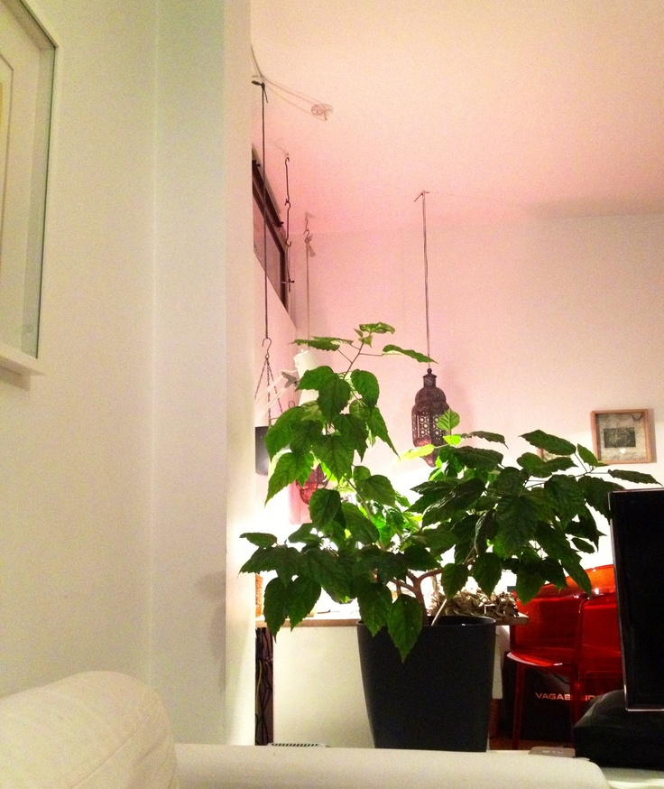 Red Kartell chair and pink Ikea lamp