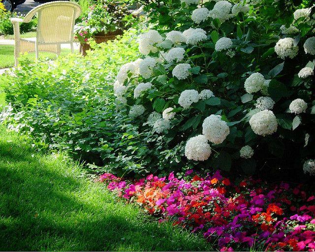 Hydrangeas and impatiens make a vivid combination planting for Garden designs with hydrangeas