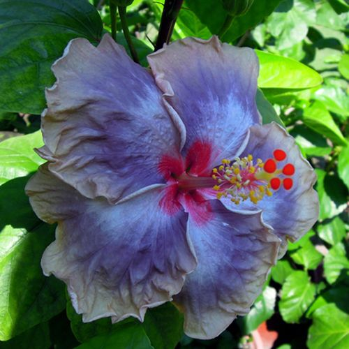 themes explored in purple hibiscus Five major issues explored in purple hibiscus are domestic violence, oppression, religion, education and love 2a) adichie uses a narrative point of view to explore.