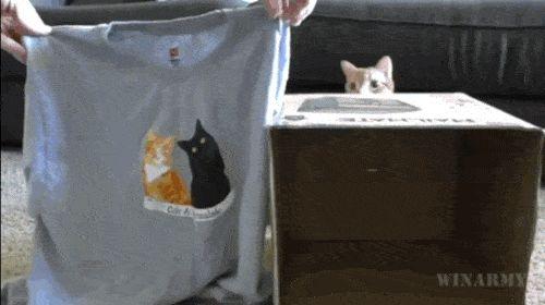 Vous cherchez une niche pour votre chat ?  Découvrez l'astuce ici : http://www.comment-economiser.fr/comment-faire-une-niche-pour-chat-avec-t-shirt.html?utm_content=buffer93cd3&utm_medium=social&utm_source=pinterest.com&utm_campaign=buffer