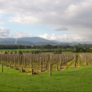 Yarra valley vineyard Australia