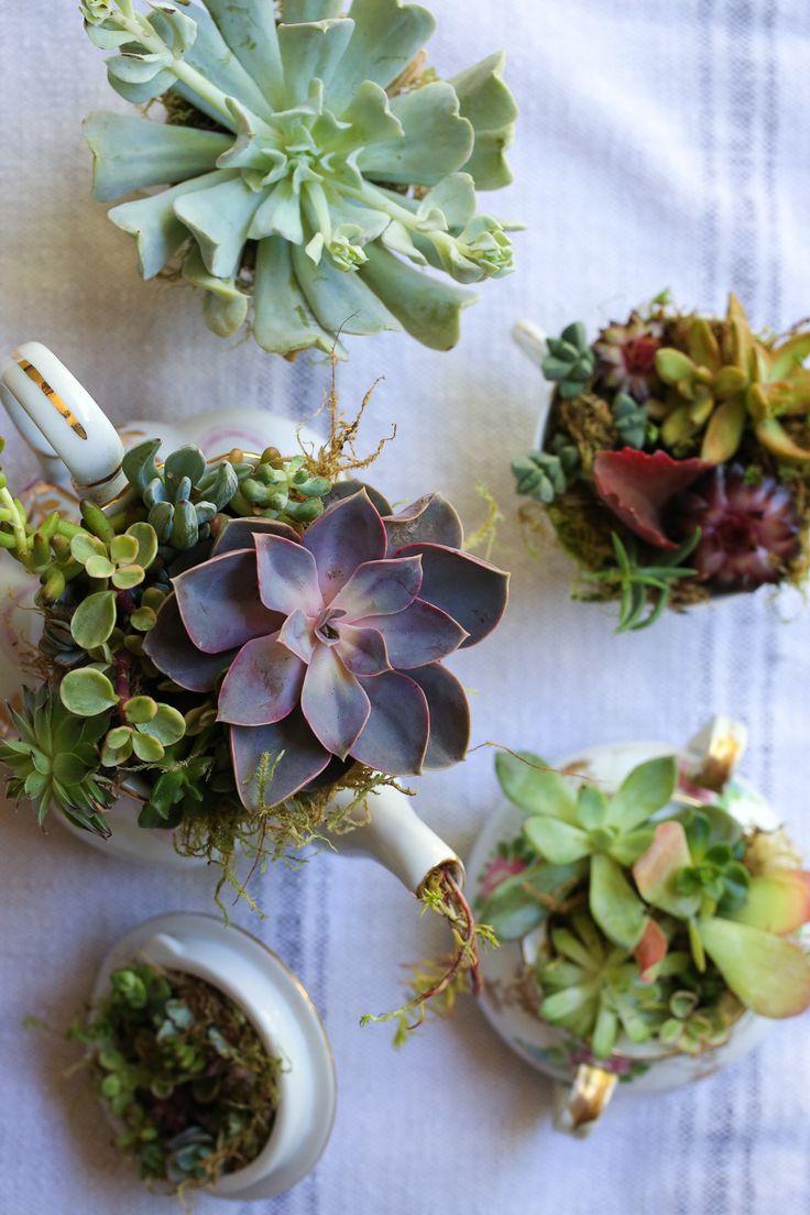 2019 best Garden and Indoor Plants ideas images on Pinterest | Indoor plants,  Plants and Tropical gardens