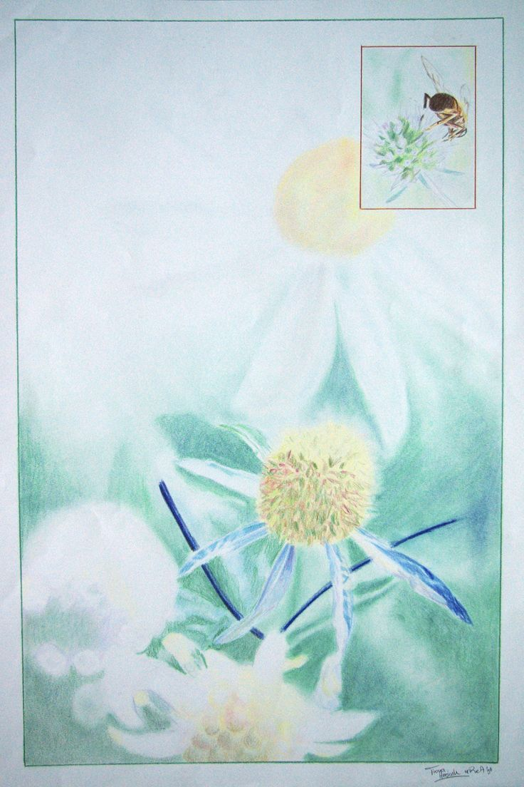 Color pencil drawing, a part of nature