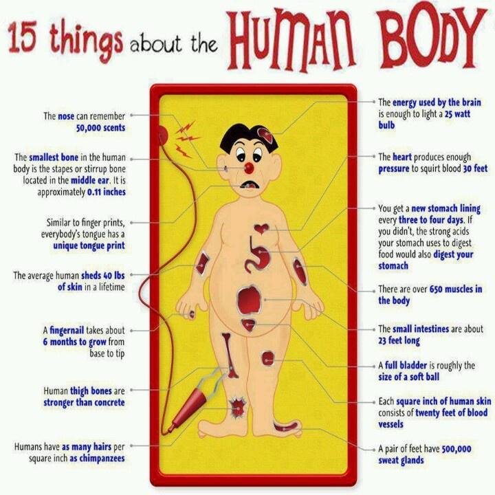 49 Best Body Facts Images On Pinterest Human Body Amazing Eyes