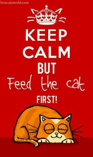 """AND, THIS """"CALM"""" CAT IS ONE HUNGRY DUDE…………ccp"""