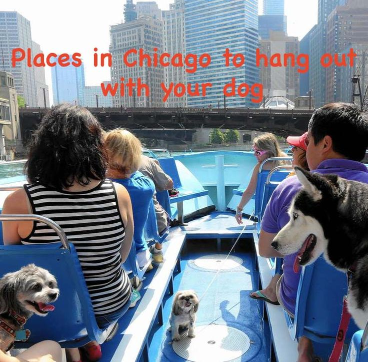 Dog-friendly locations in Chicago