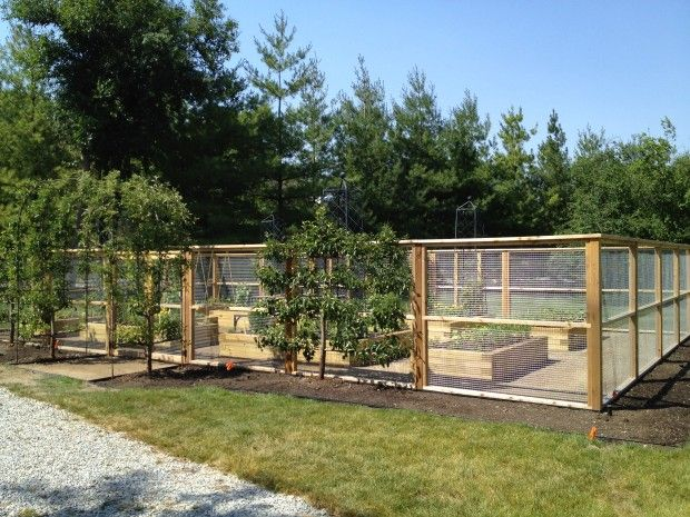 this vegetable garden is entirely enclosed by a fence of cedar and galvanized steel mesh