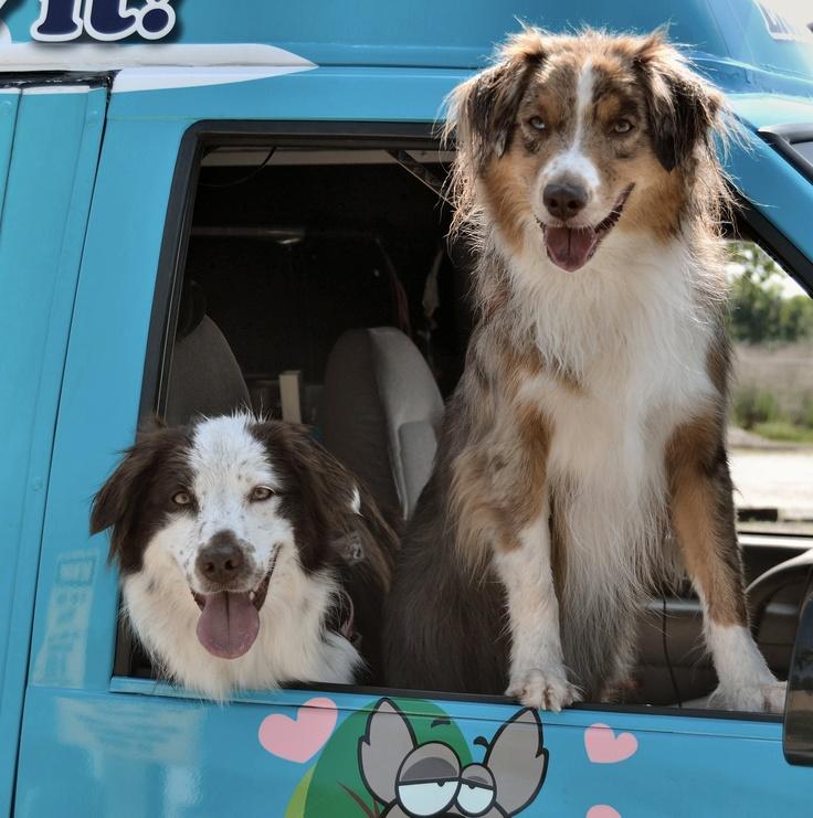 8 best jacksonville fl dogwood off leash dog park images on bella austin helping luckee dog ice cream out on may dogwood dog park jacksonville fl solutioingenieria Choice Image