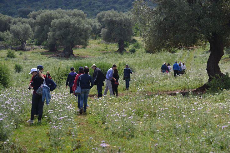 In Puglia esiste il Parco Naturale Regionale 'Dune Costiere da Torre Canne a Torre San Leonardo'; è un'area naturale protetta compresa tra i comuni di Fasano e Ostuni. E' aperto tutto l'anno. Puoi visitarlo da solo o guidato da esperti naturalistici. Le attività che si possono svolgere sono sopratutto ciclopasseggiate e trekking. Se ti iscrivi alla newsletter del sito potrai essere informato su ogni attività del fine settimana. Ph Maria F. Mangano