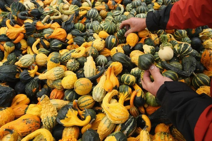 "'It's Decorative Gourd Season, Motherfuckers' Will Never Die  The author of the classic humor piece on his ""spewing"" of joy for autumn"