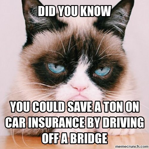 Did you know you could save a ton on car insurance by driving off a bridge?