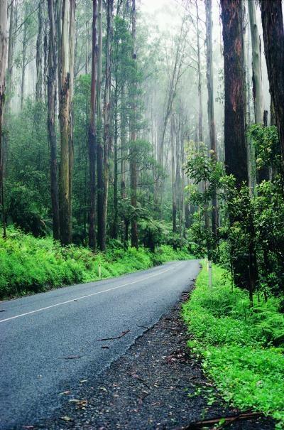 The Black Spur, Victoria, Australia