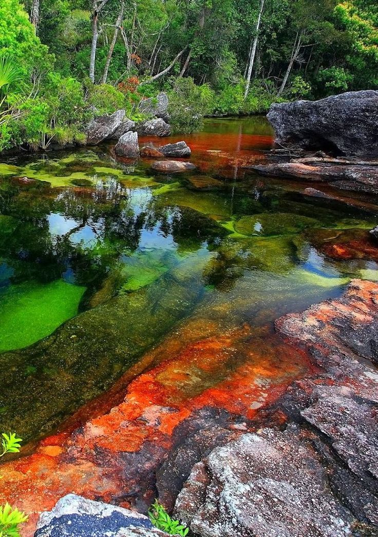 Caño Cristales – Most Beautiful River in the World. In this river you can see the full spectrum of colors, from yellow and green, to blue, black and extremely red.