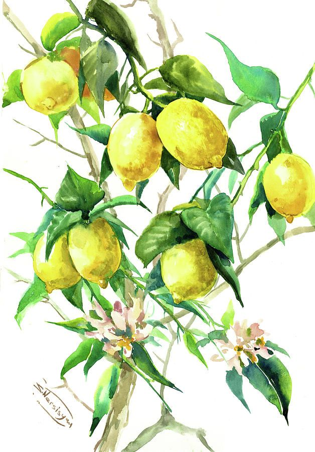 Pin By Nikki Lennox Grimaldi On Lemons Tree Painting Lemon Tree Lemon Art