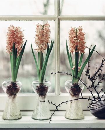 10 besten blumenzwiebeln im glas bilder auf pinterest blumenzwiebeln deko fr hling und pflanzen. Black Bedroom Furniture Sets. Home Design Ideas