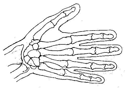 Leonardo Da Vinci first Anatomist