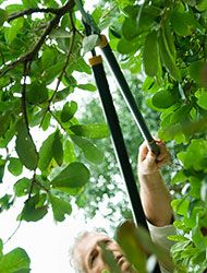 Don't get caught without the right tools for effective tree maintenance. Use this list as a guide.